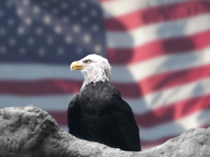 Eagle and American Flag